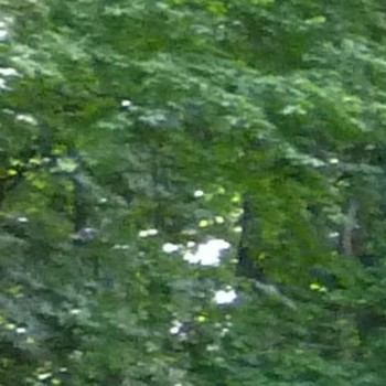 archess016 Lichess streamer picture